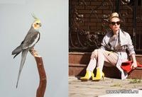 Фэшиониста, fashionista